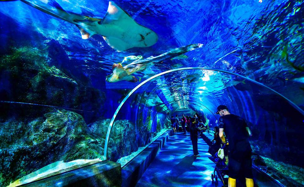 Sea Life Bangkok Ocean World.png